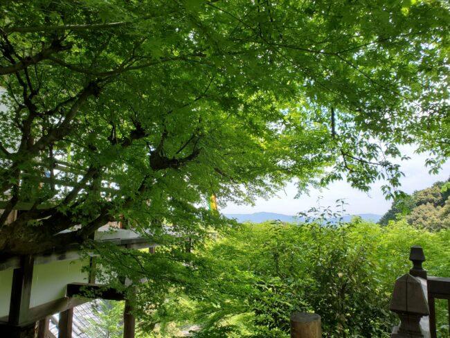 2021年新緑の嵐山はやっぱりいいところでした