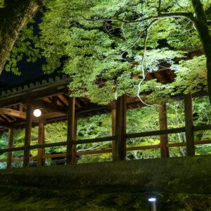 【史上初!東福寺 国宝と青もみじのライトアップ】